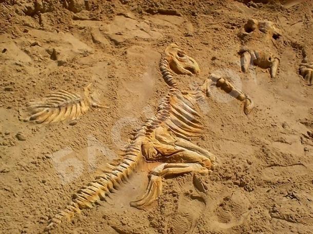 На пляже в станице Романовской появились скелеты динозавров