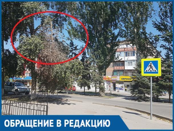 Сухая ветка повисла над пешеходной дорожкой по улице Ленина