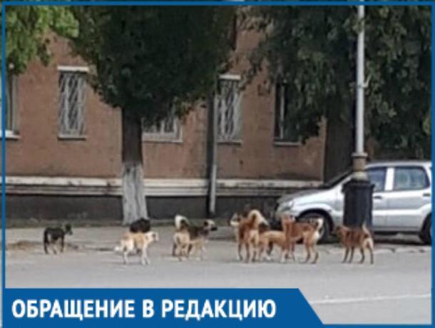 Своры бездомных собак - одна из главных проблем города, - волгодонцы