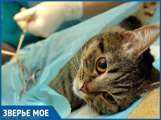 На протяжении всего года волгодонцы смогут стерилизовать своих животных со скидкой