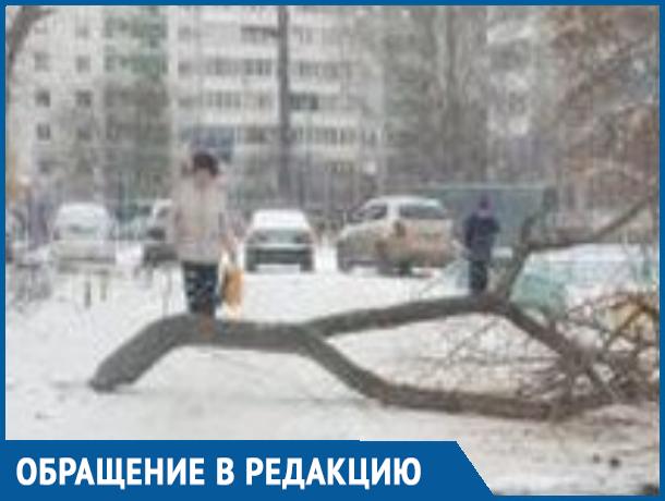 Коммунальщики бросили спиленное дерево и перекрыли въезд во дворы на улице Энтузиастов в Волгодонске