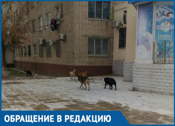 Агрессивная свора бездомных собак напугала жителей Волгодонска