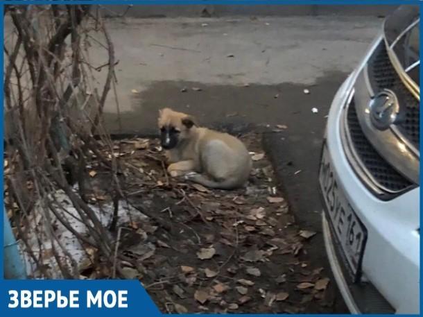 Выпивший волгодонец завел щенка, а протрезвев выкинул его на улицу