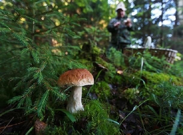 Семейная пара из Волгодонска отравилась грибами
