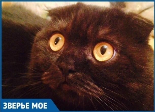 После падения из окна кот Кипиш понял как его любят и ценят хозяева