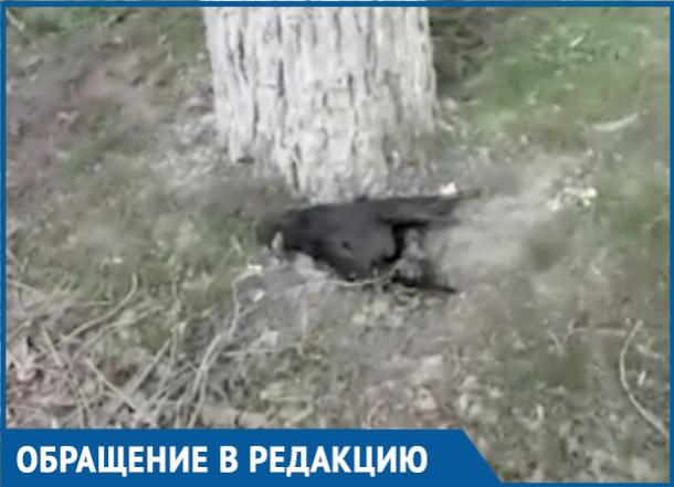 «Мертвый зоопарк» в центре города снял на видео житель Волгодонска