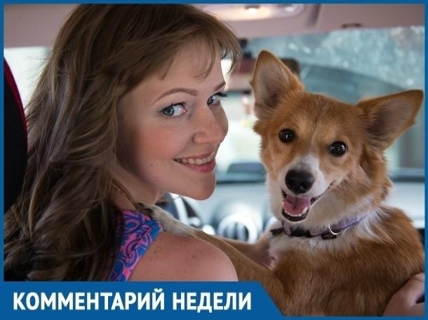 Отлов в Волгодонске существует уже много лет, но бездомных животных меньше не становится, - основатель организации «Делай добро» Алена Семина