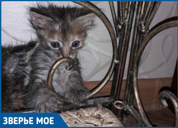 Крохотный котенок Мурзя ищет новый дом