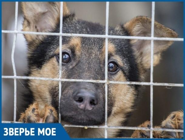 В Волгодонске утвердили место под строительство приюта для безнадзорных животных