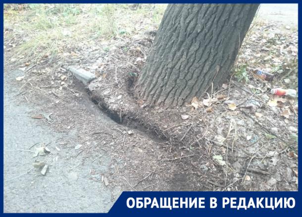 Аварийное дерево может упасть на газовую трубу и пешеходов, - волгодонец