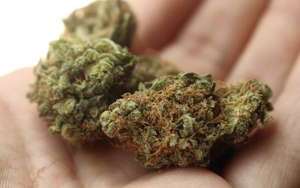 Волгодонцу грозит до десяти лет тюрьмы за хранение крупной партии марихуаны