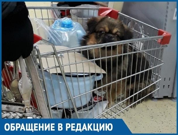 Волгодончанка, катающая свою собаку в тележке для продуктов, возмутила посетительницу гипермаркета