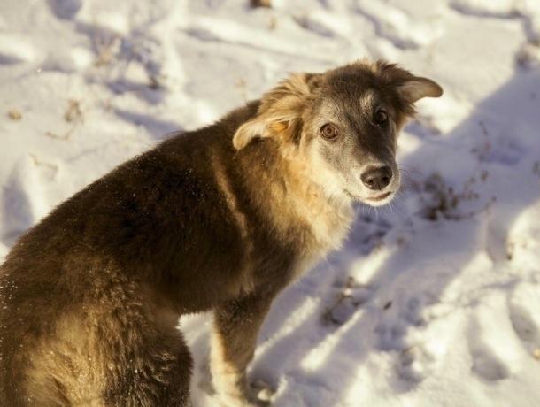 ВРостовской области бездомных животных после отлова небудут отпускать наулицы