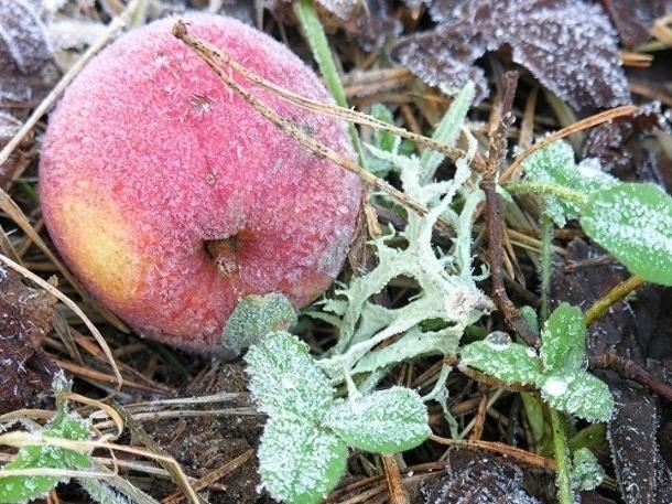 МЧС: заморозки угрожают сельхозкультурам насевере Ростовской области