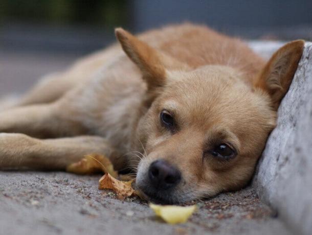 Картинки по запросу бездомные животные