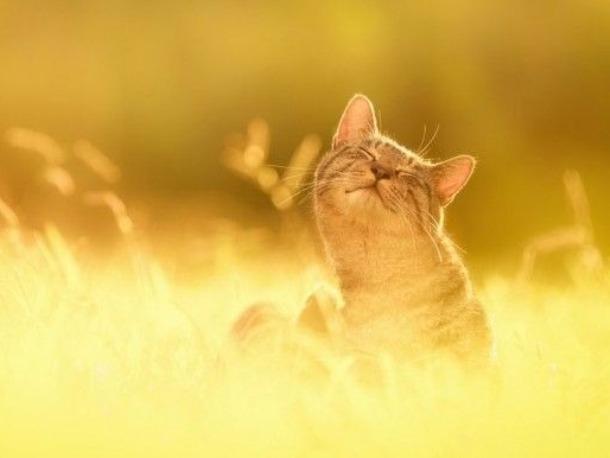 Сегодня сохранится солнечная и жаркая погода