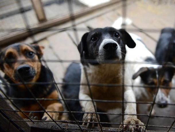 В Волгодонске в очередной раз отложили вопрос о строительстве приюта для безнадзорных животных