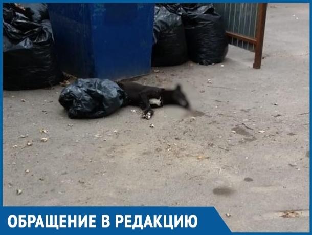 Жители Красного Яра обеспокоены массовой травлей бездомных и домашних животных