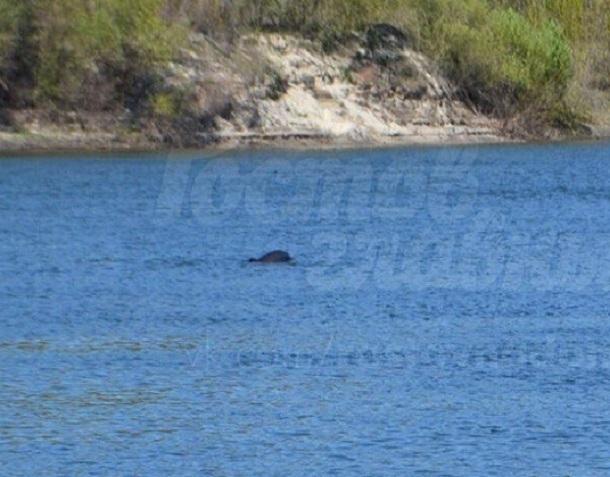 Появилось видео приплывших вДон дельфинов