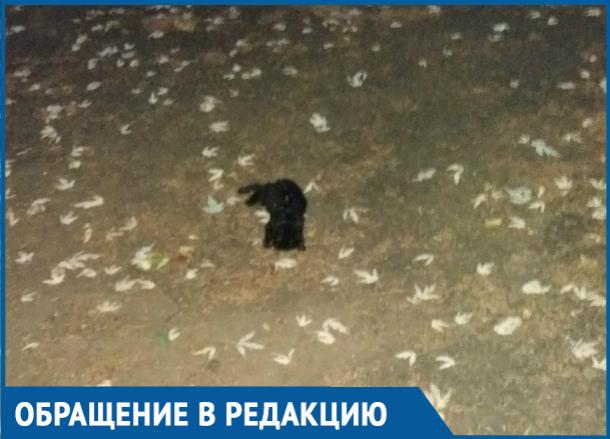 Крошечных котят отравили и бросили умирать на территории детсада в Волгодонске
