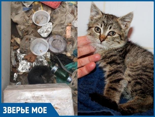 Около месяца маленький котенок жил в яме с мусором рядом с мертвой мамой-кошкой