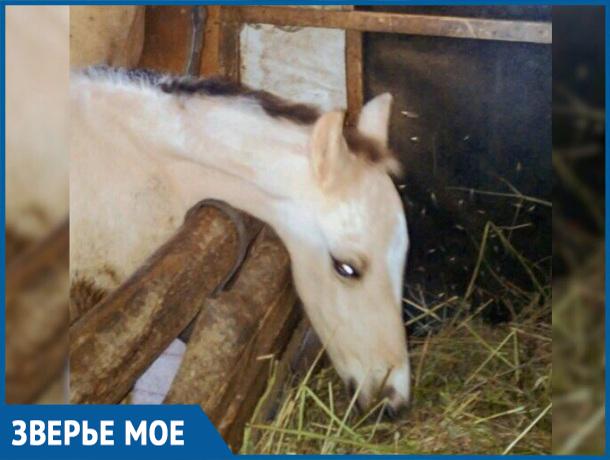 В волгодонском конноспортивном клубе «Донские казачки» родился жеребенок