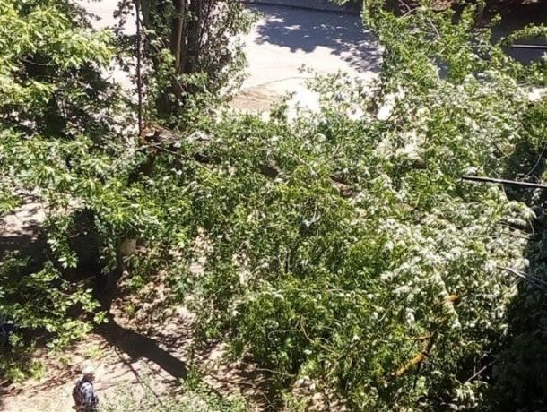 Буйство природы: в Волгодонске сильный ветер сносит деревья