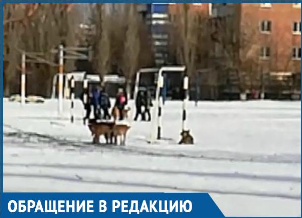 Свора бездомных собак, гуляющих на территории школы, возмутила волгодонцев