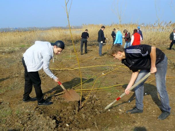 Порядка двух с половиной тысяч деревьев посадили в Волгодонске в Год экологии
