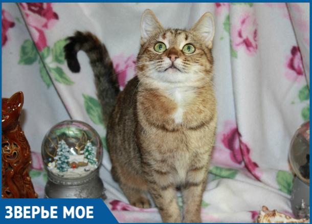 Хозяева оставили умирать беззащитную беременную кошку на улице