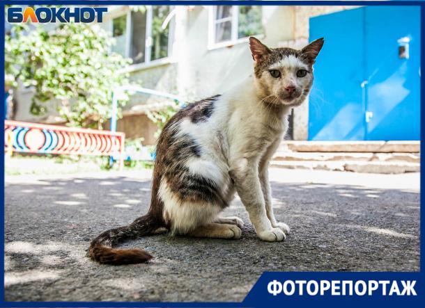 «Они не знают, что существует человеческая ласка»: как живут бездомные коты Волгодонска
