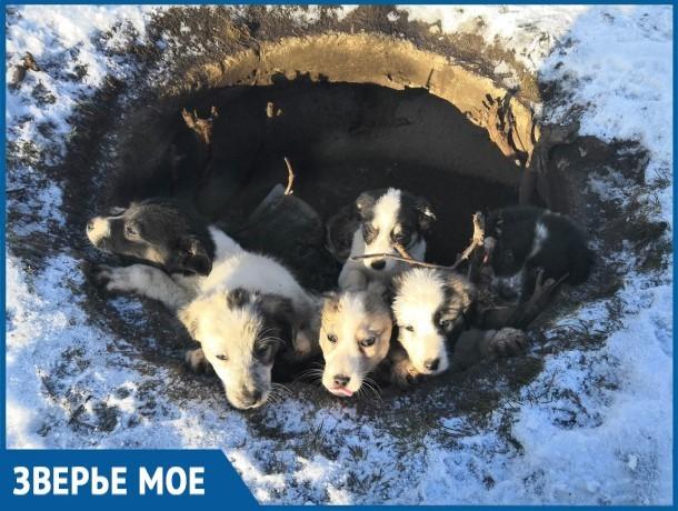 Шесть маленьких щенков прячутся от холода в яме в районе Химзавода в Волгодонске