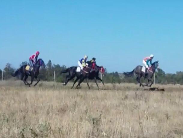 Конно – спортивные соревнования прошли на фестивале «Шелковый путь» в Волгодонске