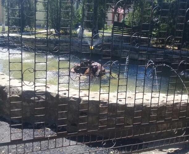 Волгодончанка возмущена тем, что в городе не работают фонтаны, а возле Водоканала устроили «оазис»