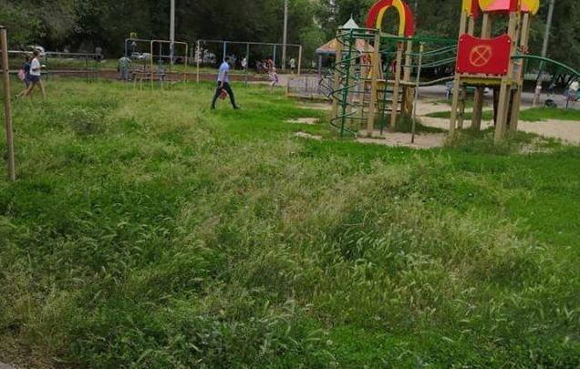 За разбросанные на улице обрезанные ветки деревьев, управляющие компании  Волгодонска будут штрафовать