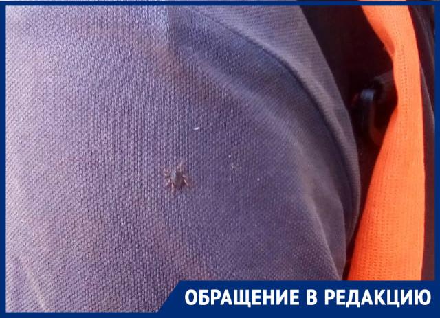 Клещи атаковали сквер «Дубравушка» в Волгодонске