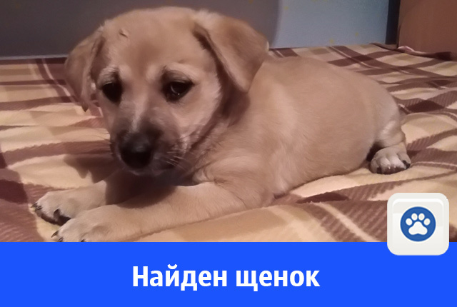 Хорошего щенка отдают в добрые руки