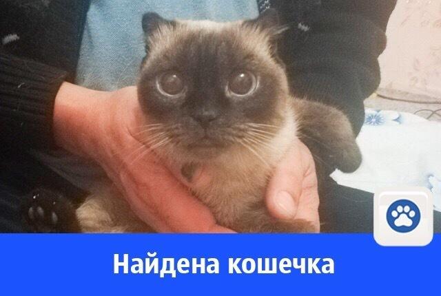 Найдена кошка в Волгодонске