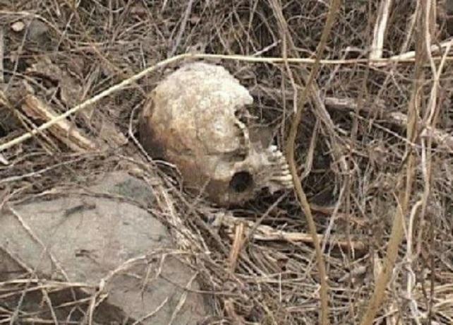 Скелет погибшего мужчины нашли рядом с трассой Ростов - Волгодонск