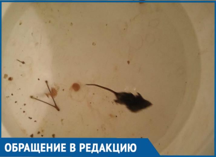 Мыши атаковали квартиру на 10-м этаже в Волгодонске