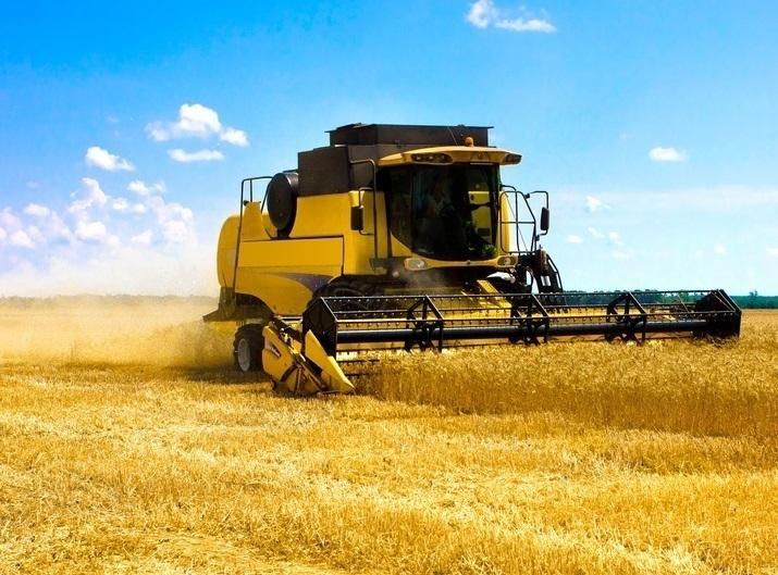 Датчане передумали выращивать пшеницу в Зимовниковском районе