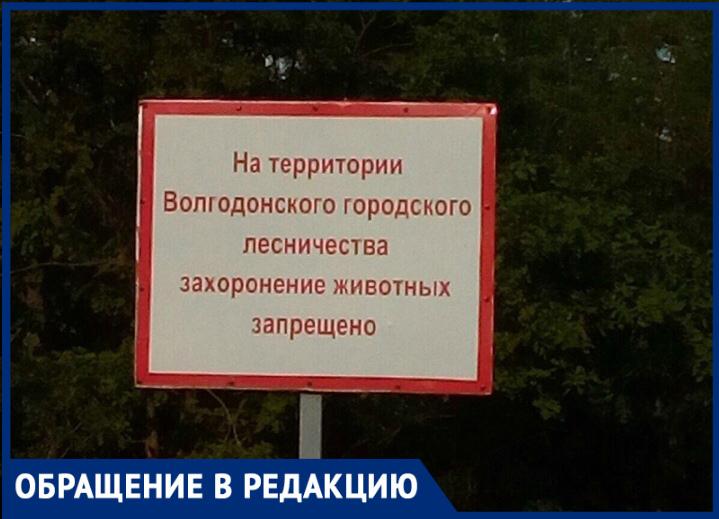 Волгодончанка просит городские власти организовать кладбище домашних животных