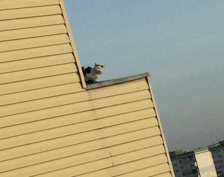 Застрявшую на карнизе 9-го этажа голодную кошку пытаются спасти всем Волгодонском