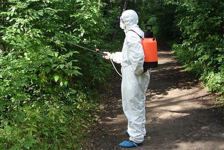 Энтомологи: самое безопасное садоводство города - «Мирный Атом»