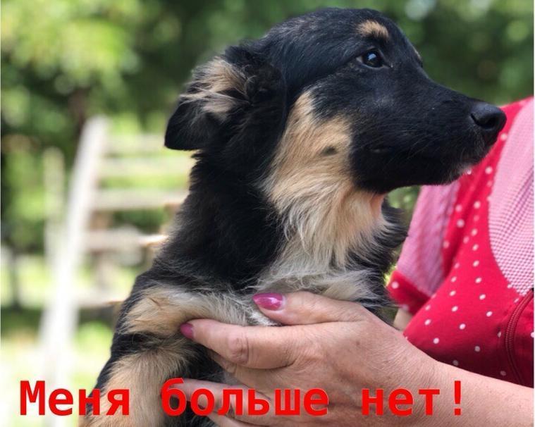 Беззащитного щенка насмерть забили палками трое мужчин в Волгодонске