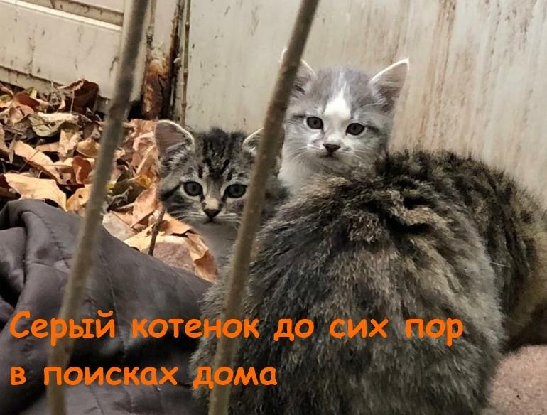 «Помогите им выжить»: крошечным красивым котятам ищут заботливых хозяев