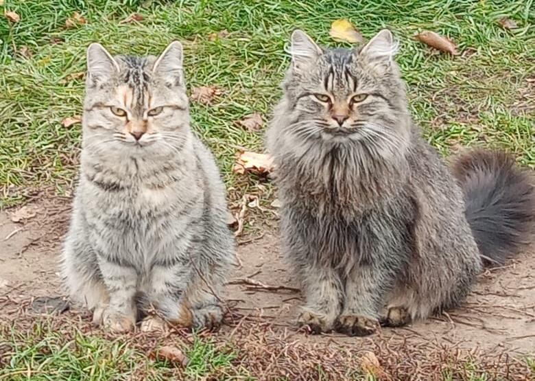 Две красотули с хитрым взглядом в поисках любящих семей