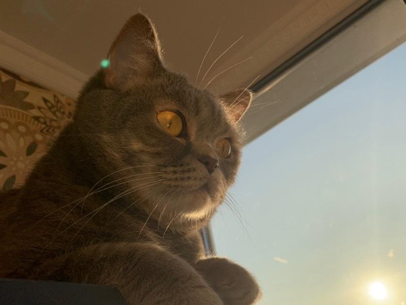 В Волгодонске спасатели вытащили застрявшего в вентиляции котенка