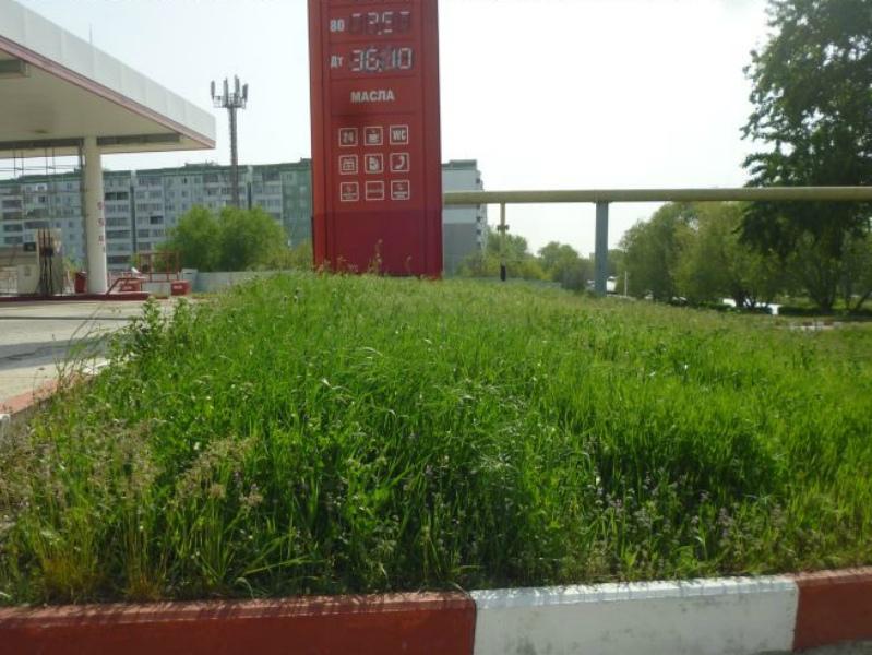 Волгодонск вошел в число городов, оштрафованных за нескошенную траву