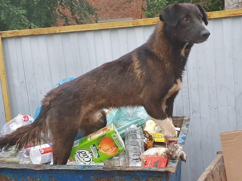 Волгодонск потратит на одну бездомную собаку более 13 тысяч рублей